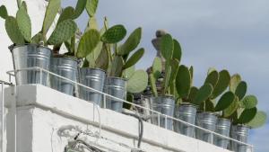 Kaktus einmal anders